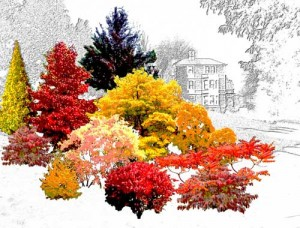 Artist's impression of the new autumn colour tree collection