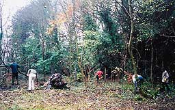 A working party clearing undergrowth at the old railway line to create a nature trail